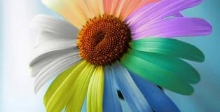 10 онлайн-инструментов для работы с цветами