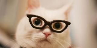 5 истин UX, которым нужно научиться у кошек
