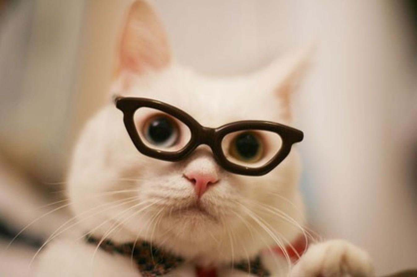 Картинки прикольные с кошками в очках для авы